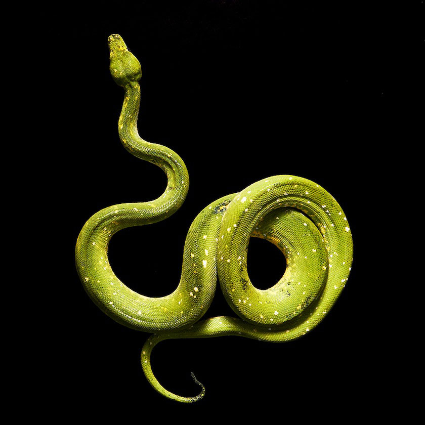 01 snake