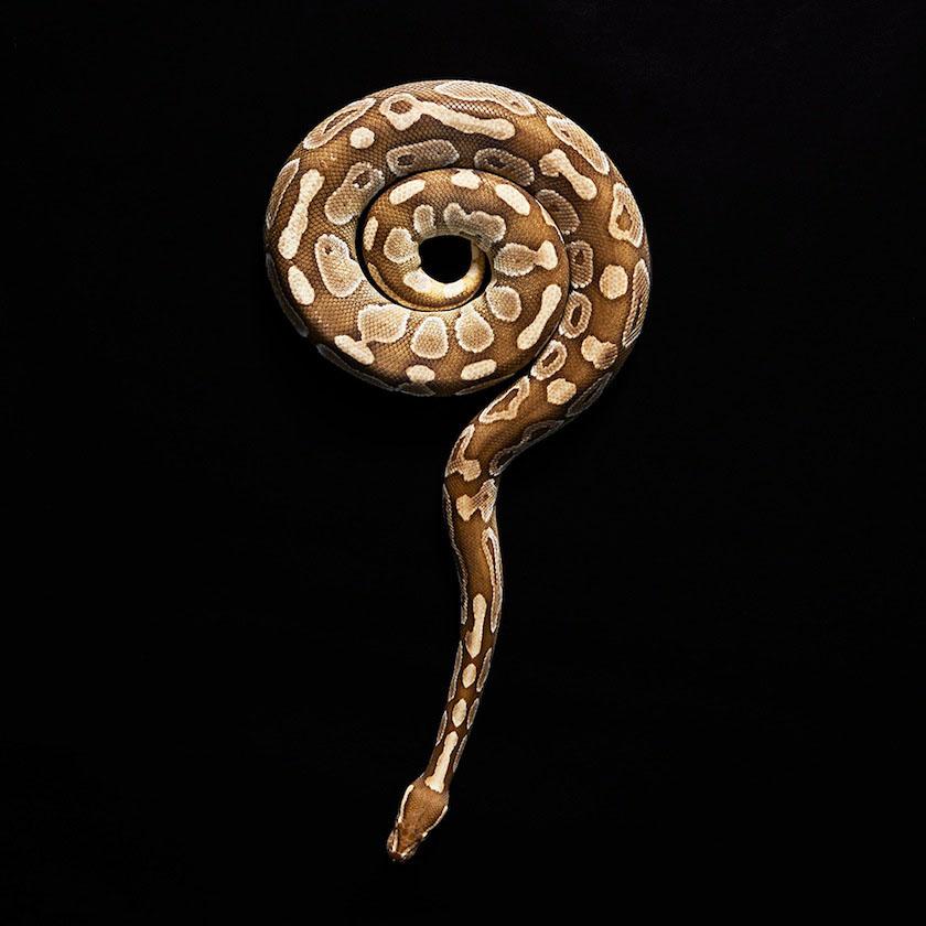 02 snake
