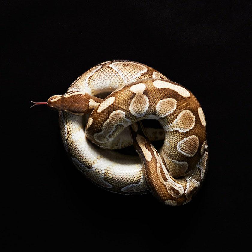 03 snake
