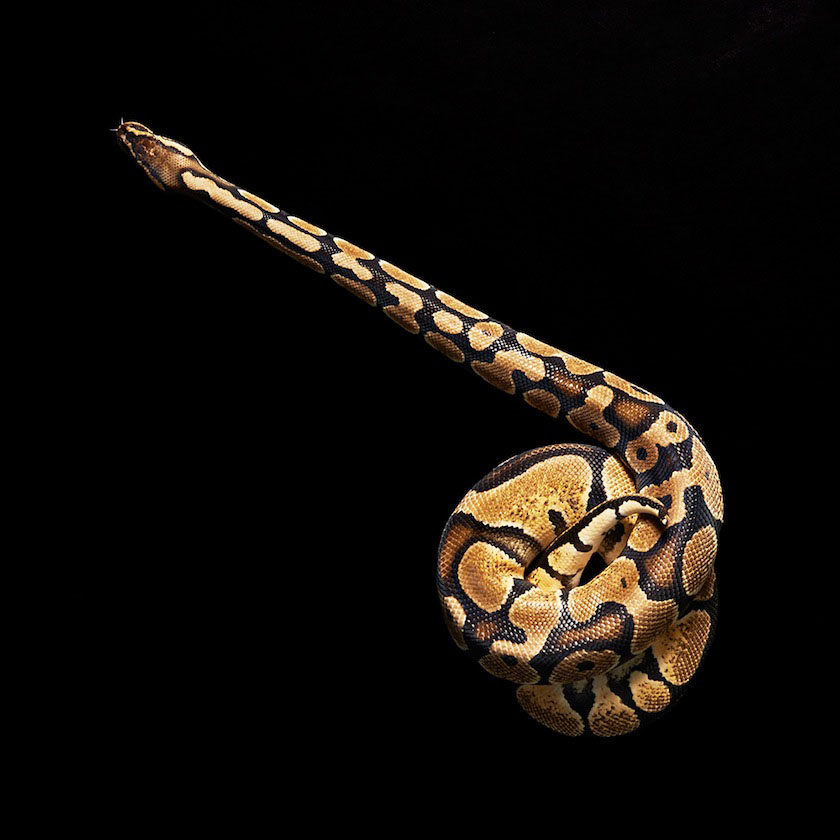 04 snake