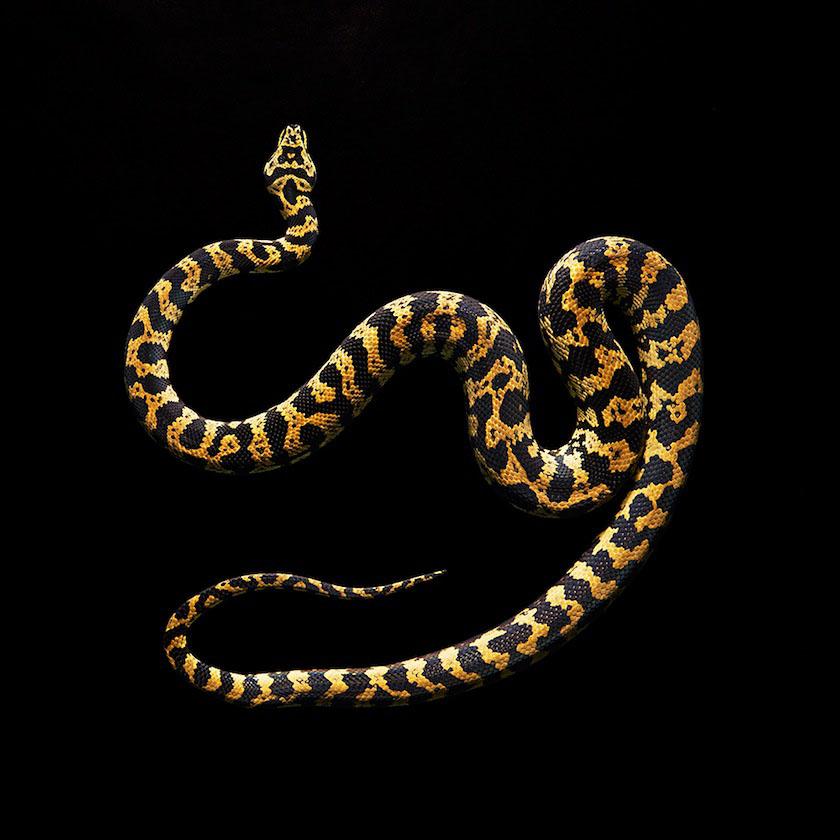 05 snake